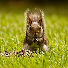 The Squirrel i-Phone / iPad Cover by Jim Haley