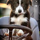 Working Dog by Kym Howard