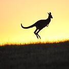 The Aussie Icon - Kangaroo - Whittlesea, Victoria by Heather Samsa