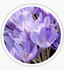 Crocus Sticker