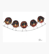 FIVE ROBINS Photographic Print