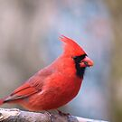 Red all over! by Penny Fawver