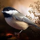 Black Capped Chickadee by Elaine Manley