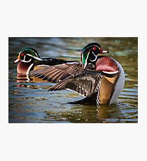 Two Woodies Photographic Print