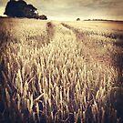 Wheat Field by Nikki Smith (Brown)