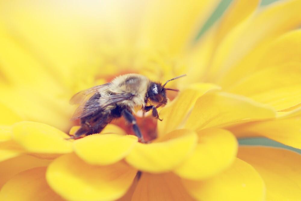 Bee on Yellow by Shannon Ferguson