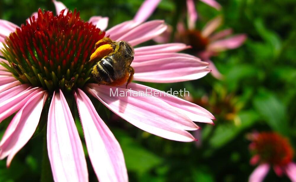 Working wasp by MarianBendeth