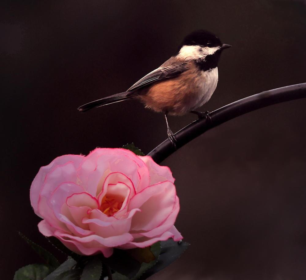 WINTER BIRD by RoseMarie747