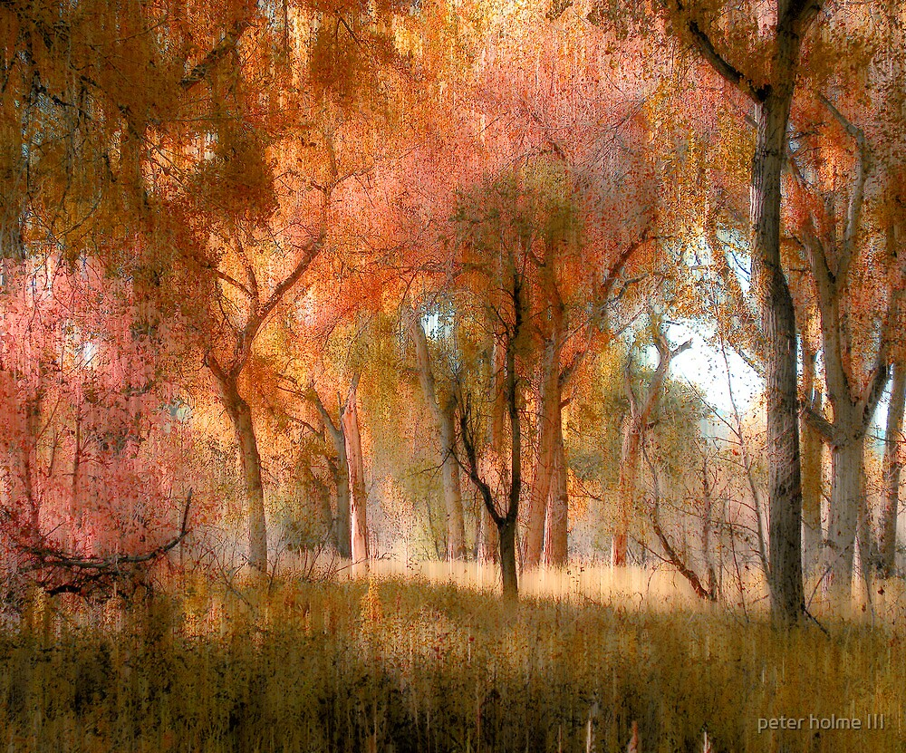 2624 by peter holme III