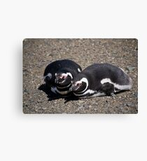 A Pair of Magellanic Penguins at Magdalena Island, Chile Canvas Print