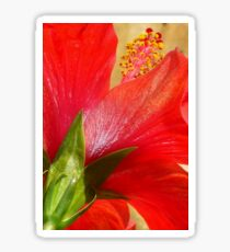 Back View of A Beautiful Bright Red Hibiscus Flower Sticker