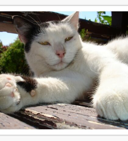 Black and White Bicolor Cat Lounging on A Park Bench Sticker