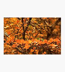 A Taste of the Fagus Photographic Print