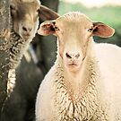"""What Are Ewe Staring At ?"" by Renee Blake"