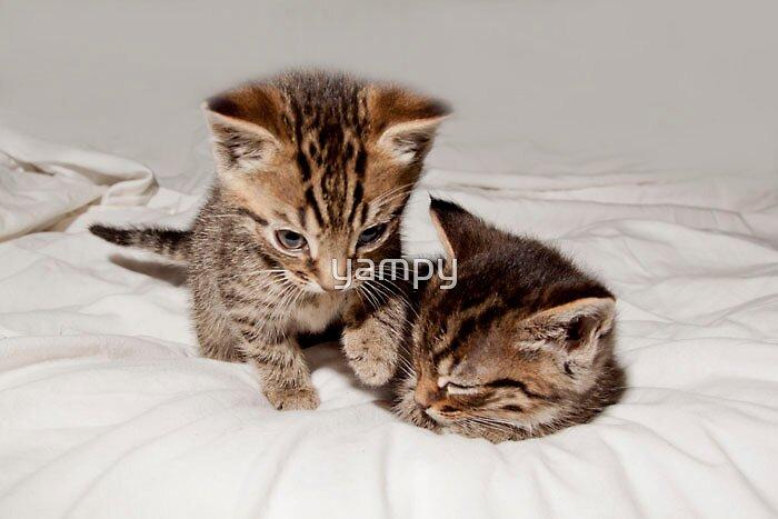 Sleepy Kitten by yampy