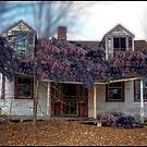 A State of Wisteria by Wayne King