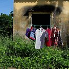 washing - $1/kilogram (see text) by geof
