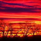 Fire In The Soul Sunrise by Gregory J Summers