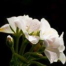 Nature's Bouquet by Sue Ratcliffe