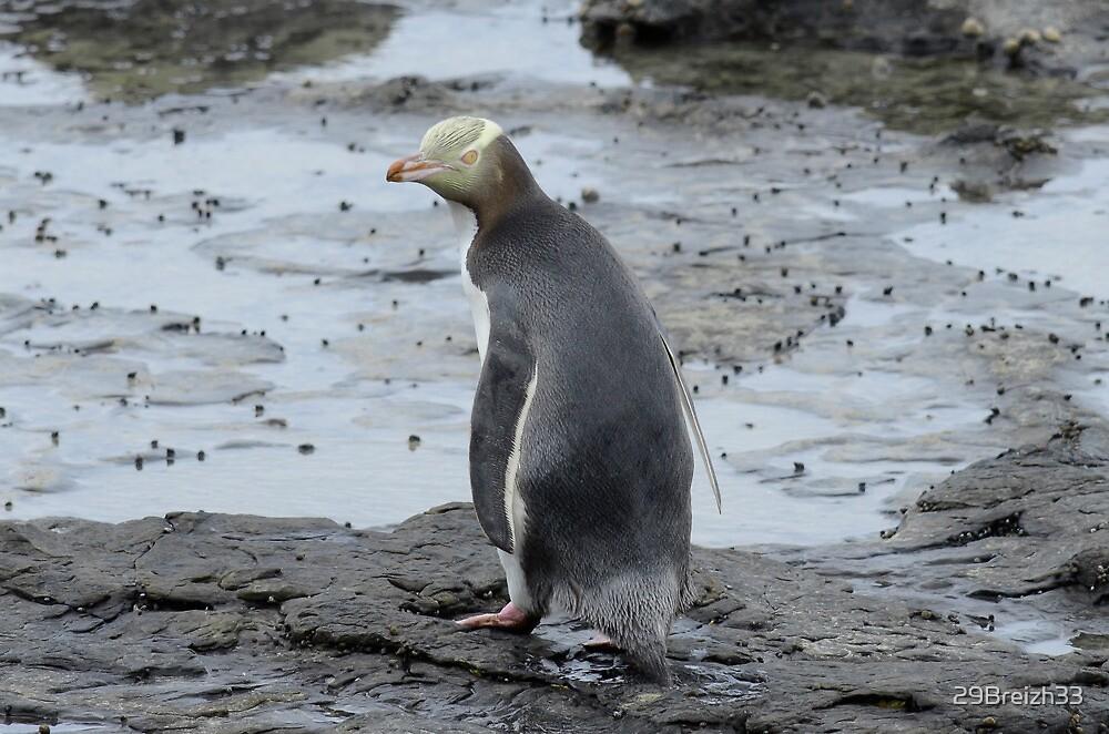 Yellow Eyes penguin by 29Breizh33