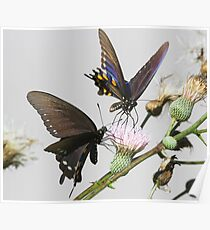 Butterflies  in the park Poster