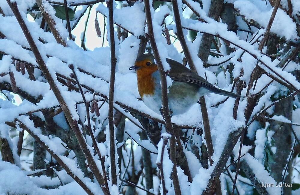 Peek A Boo Robin   - Uplyme Devon UK by lynn carter
