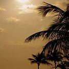 palms by ofeelia