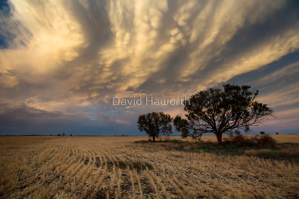 Baradine Sunset by David Haworth
