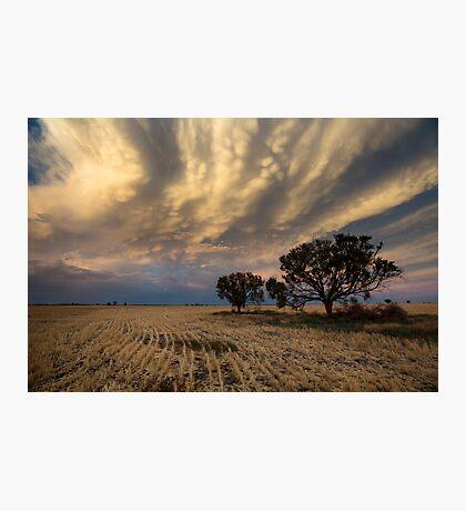 Baradine Sunset Photographic Print
