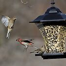 Action At The Feeder by Douglas  Stucky