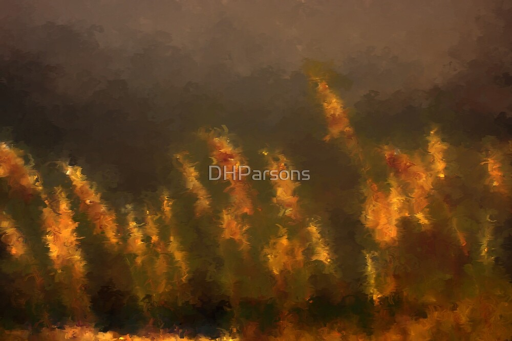 Sea Oats by DHParsons