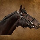Brown Bridle by Simon Harris