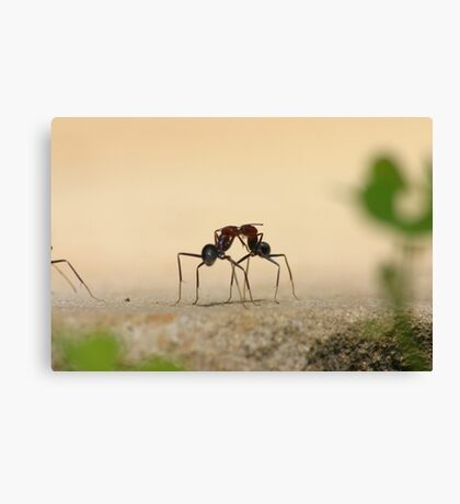 Ants... communicating? Canvas Print