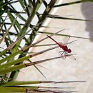 Dragonfly2 by JMaxFly