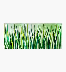 Watercolor Grass Photographic Print