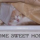 A cats home sweet home by neonunchaku