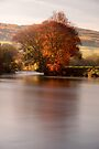 Fiery tree on the River Tay, Perthshire, Scotland by Cliff Williams