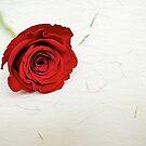 A Single Rose by fernblacker