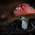 Red Cap  by Kim Roper