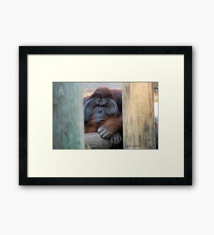 Orangtan Framed Print