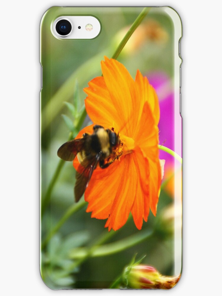 Bumble Bee iPhone Case by iphonejohn