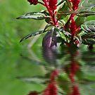 Flower Reflection by Kristen O'Brian