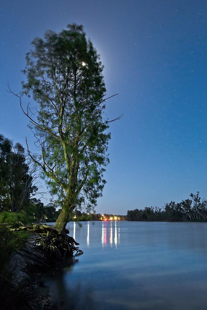 River Murray Christmas Tree 2012 by pablosvista2