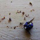 108/365 an extraordinary blue by LouJay