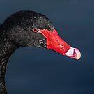 Black Swan by George I. Davidson