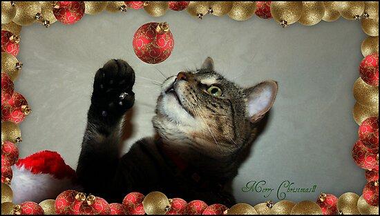 Merry Christmas!!! by jodi payne