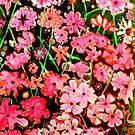 """Pink Flower Etching No.1 by Belinda """"BillyLee"""" NYE (Printmaker)"""
