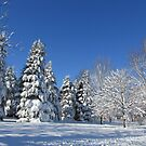Winter Wonderland by Linda Miller Gesualdo
