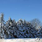 All In A Row In The Snow by Linda Miller Gesualdo