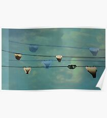 Underwear on a washing line  Poster